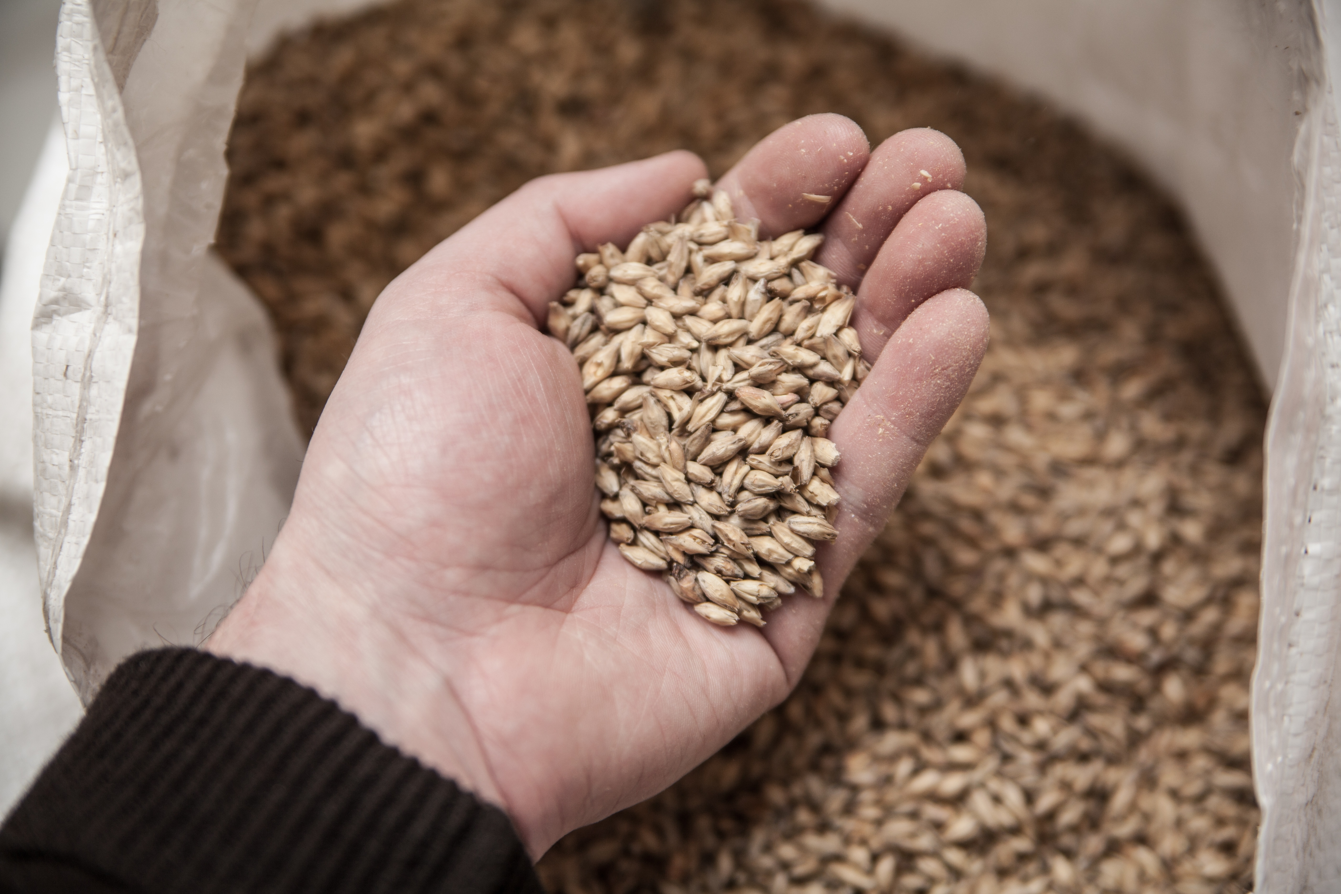Malting and Milling